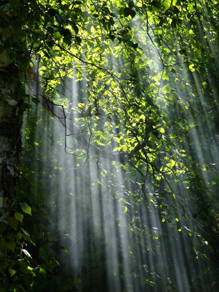difusión de la luz (propiedad)
